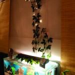 Akvariet lilla mindre