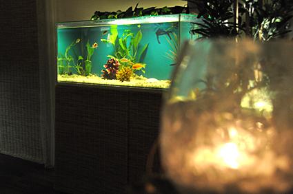 fish spa stockholm escort i örebro